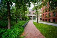 Walkway and buildings at Harvard University, in Cambridge, Massa Royalty Free Stock Photography