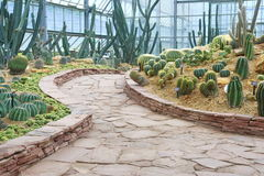 Walkway and cactus garden Stock Photo