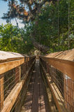 Walkway Canopy in the trees Royalty Free Stock Photo