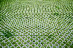 Walkway cement, grass pattern For Home. Outdoor Stock Photos
