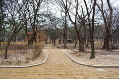 The walkway at Changgyeong palace area3 Royalty Free Stock Photo