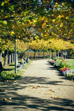 Walkway in the city park Royalty Free Stock Photography