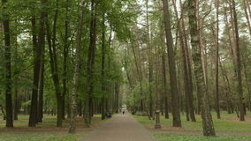 Walkway in the city park. Autumn daytime. Smooth dolly shot stock footage
