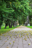 Walkway of city park, strewn with wild apples Royalty Free Stock Photos