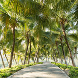 Walkway with coconut tree in the garden Stock Image