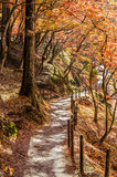 Walkway with Colorful Autumn Leaf Royalty Free Stock Photography