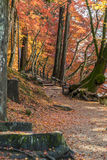 Walkway with Colorful Autumn Leaf Stock Photos