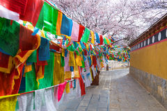 Walkway with colorful tibet style flag in china Royalty Free Stock Images
