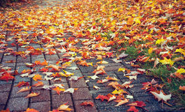 Walkway covered with autumn leaves Royalty Free Stock Photo