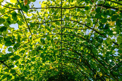 Walkway Covered by Green Leaves Stock Photography