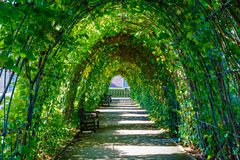 Walkway Covered by Green Leaves Stock Photos