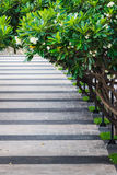 Walkway covered by Plumeria Tree. Walkway in the Park covered by Plumeria Tree Royalty Free Stock Images