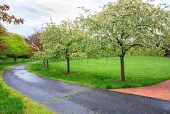 Walkway Crab Apple Trees Virginia Park Royalty Free Stock Photo