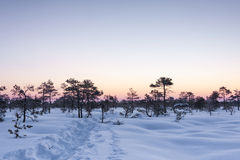 Walkway in deep snow in a marsh at winter stock photography