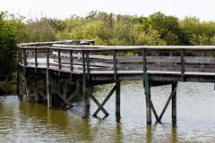 Walkway in the Everglades Royalty Free Stock Image