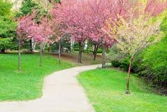 walkway för trees för Cherryblommabana fotografering för bildbyråer
