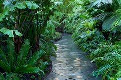 Walkway Through Fern Jungle Royalty Free Stock Photo