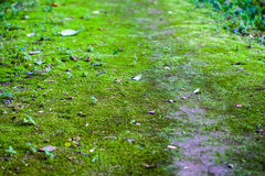 Walkway is filled with moss. Walkway in forest is filled with green moss Stock Photo