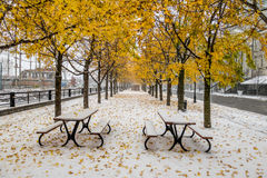 Walkway on the first snow with yellow leaves falling of trees - Montreal, Quebec, Canada stock photos