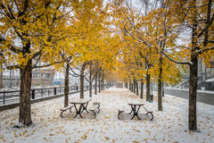 Walkway on the first snow with yellow leaves falling of trees - Montreal, Quebec, Canada stock image