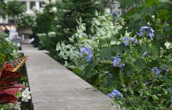Walkway with flowers and plants fading into the distance royalty free stock image