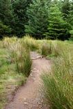 Walkway through forest. Scotland, UK stock image