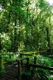 Walkway in the forest Royalty Free Stock Photo