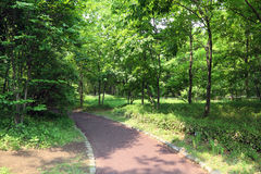 A walkway through forest Stock Photo