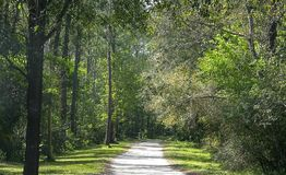 Walkway Through Forest Stock Photography