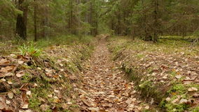 Walkway in the Forest. Autumn daytime. Smooth dolly shot.  stock footage