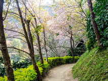 The walkway in the forest. Stock Photos