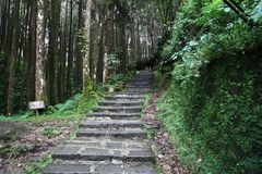 The walkway in forest have beautiful environment at taiwan.