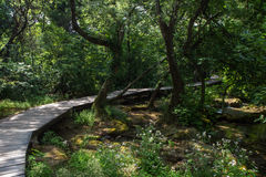 Walkway in a forest at the Krka National Park Royalty Free Stock Photo