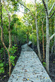 Walkway in the forest Royalty Free Stock Photography