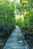 Walkway in the forest Royalty Free Stock Image
