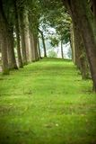 Recreational path in green park lined up with trees and grass Royalty Free Stock Photo