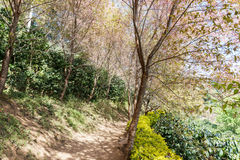 Walkway in the forest Stock Photography