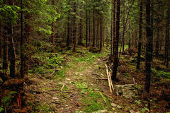 Walkway Through Forest Royalty Free Stock Images