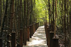 Walkway in forest Royalty Free Stock Photos