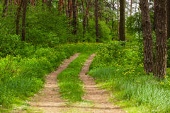 Walkway in forest Stock Images