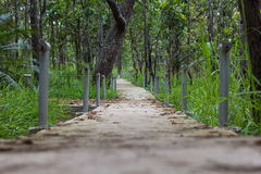 Walkway in forest. At Thailand Stock Images