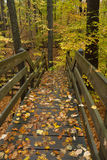Walkway through forest. Stock Image