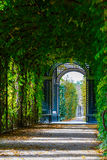 Walkway forming a green tunnel of acacias. Romantic garden walkway forming a green tunnel of acacias Royalty Free Stock Photo