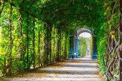 Walkway forming a green tunnel. Romantic garden walkway forming a green tunnel of acacias Stock Images