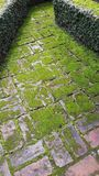 Walkway. The walkway in Garden of Dream Park in Kathmandhu , Nepal consists of rectangular bricks arranged alternately along the way. On the bricks there is Royalty Free Stock Photography