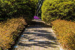 Walkway in a garden of green and red Royalty Free Stock Photos