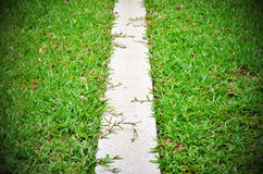 Walkway grass between the bushes in the garden along the space s Royalty Free Stock Photography