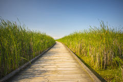 Walkway on green tall grass Stock Image