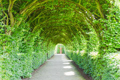 Walkway with green trees Stock Images