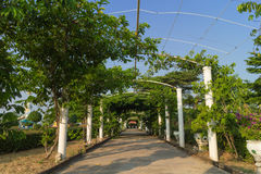 Walkway with the green tunnel of trees Stock Photo